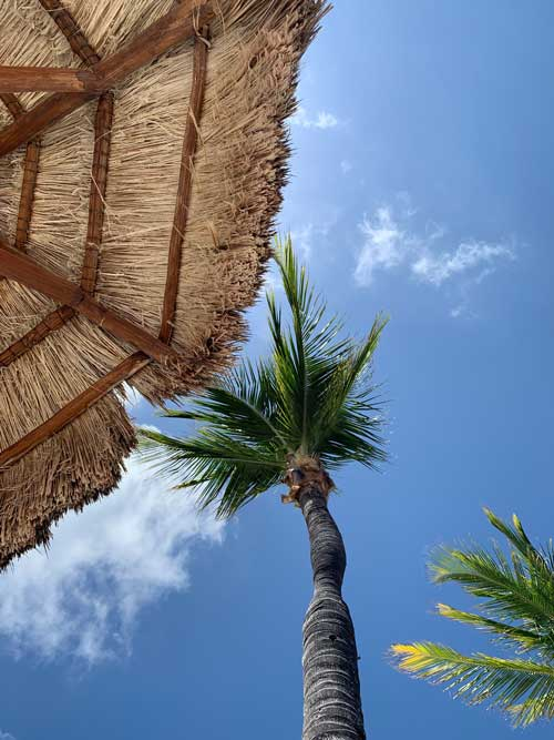 A towering palm tree above the Island beach hut.