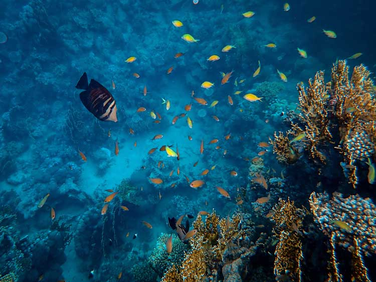 A variety of fish swim along the colorful coral that surrounds the Turks and Caicos Islands.