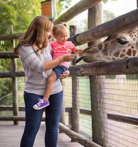 Dickerson Park Zoo in Springfield, MO