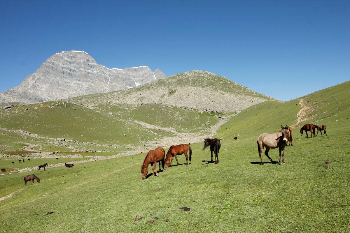 Photo Essay: Trekking in the Kashmir Valley