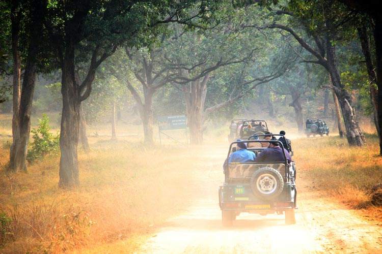 Jeeps ready for to trek into Bandhavgarh National Park in India for the safari trip.