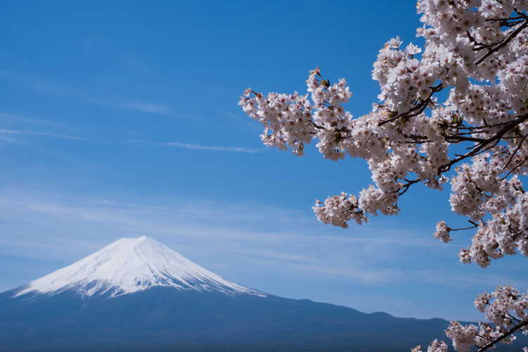 Cherry blossoms mix into the view of Mount Fuji in Japan.