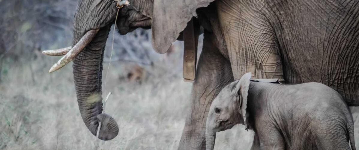 Seeing elephants is a highlight during a journey in South Africa