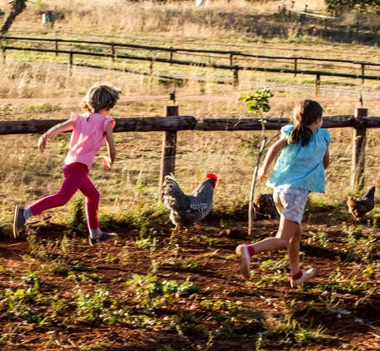 Kids running and playing with the house chickens.