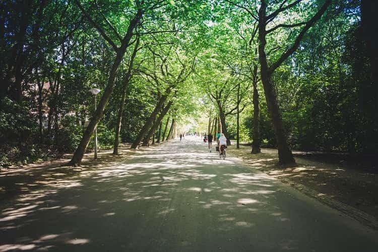 The calm environment of Vondelpark, Amsterdam