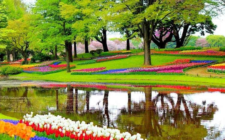 The picture perfect view of Keukenhof's Garden of Europe