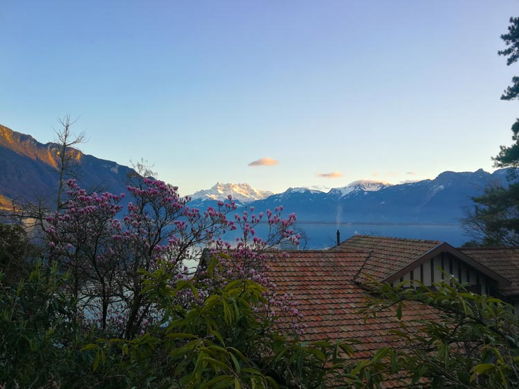 Flowers bloom with the Swiss peaks in distance.