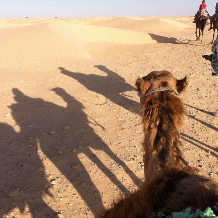 A memorable camel tour.