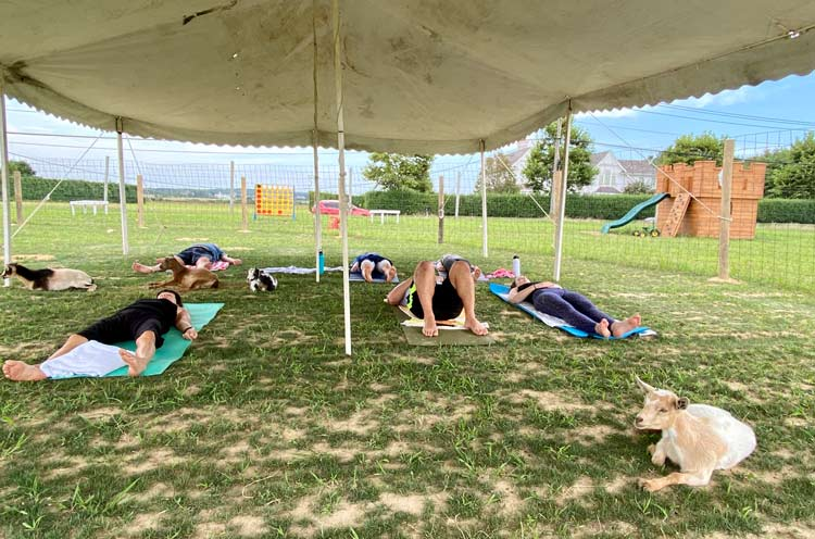 Relax on the farm with goat yoga.