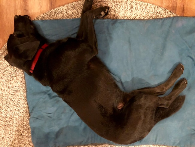 Henry on courtesy doggie bed. Photo by Claudia Carbone
