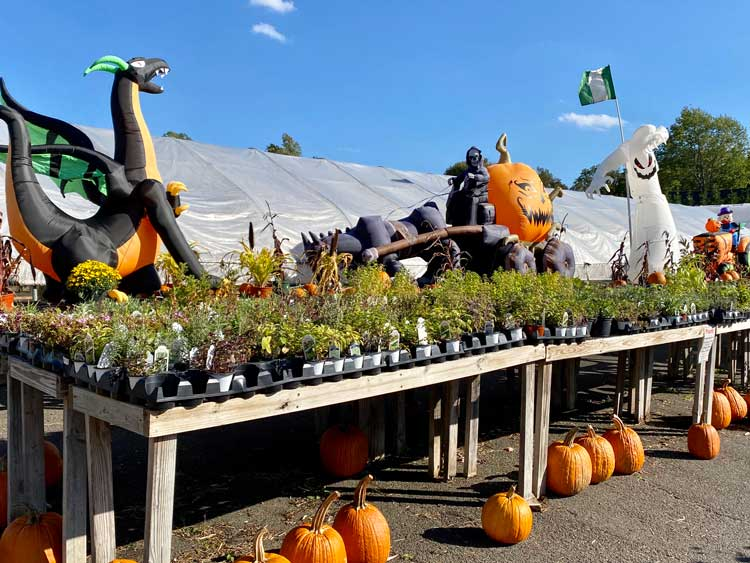 Browse seasonal herbs, pumpkins and decorations.