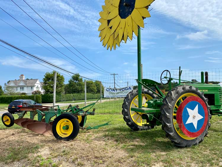 Sunflower maze and tractor rides at pumpkin patch in NYC.