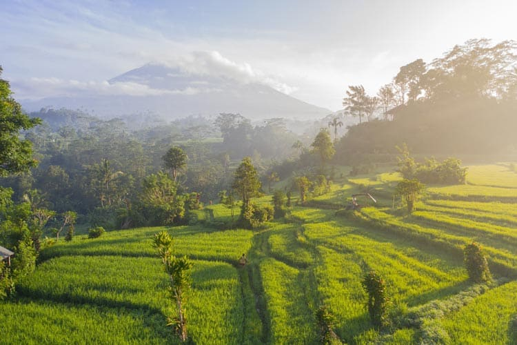 Fields and nature in Bali.