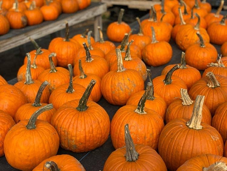 Pumpkin patch near New York City.