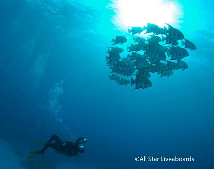 Following Atlantic Speedfish on an All Star dive.