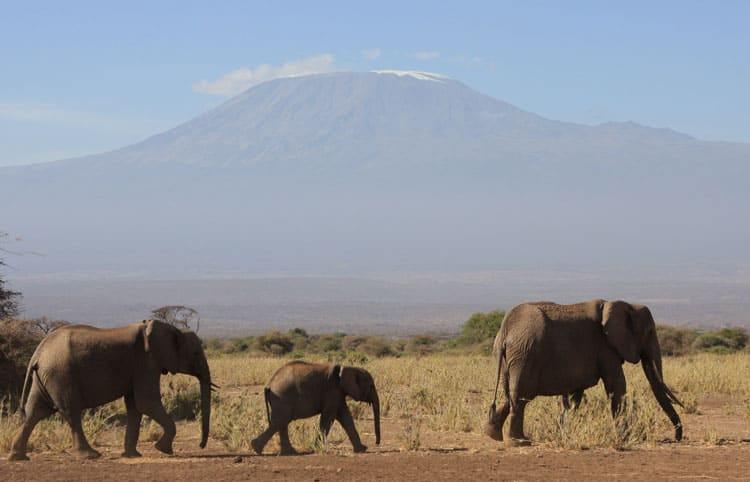 Elephants on the move with Kilimanjaro in the distance.