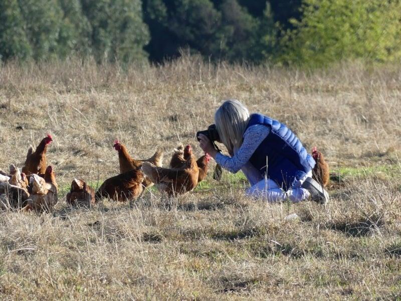 Fordoun Chickens posing. Photo courtesy of Adrian Rorvik