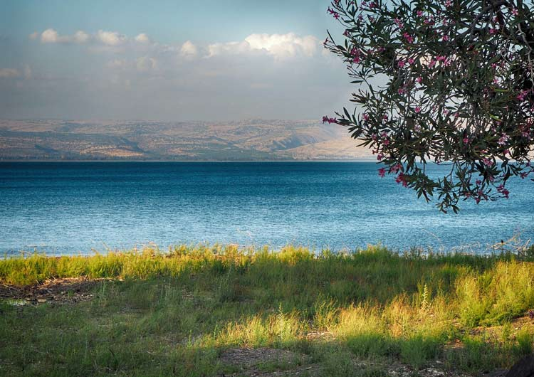 Looking out on the Sea of Galilee