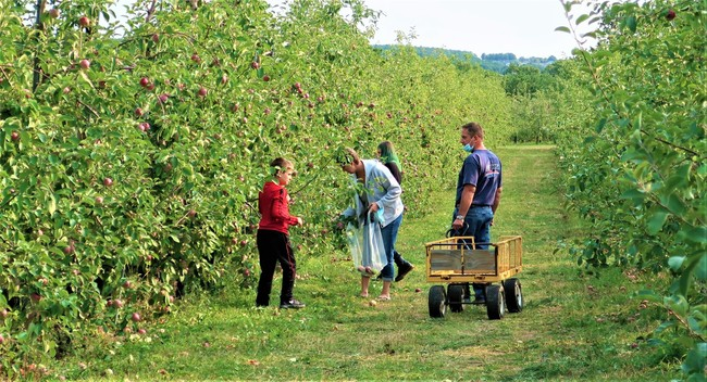 Apple picking during the Empire State Road Trip.    Photo by Victor Block