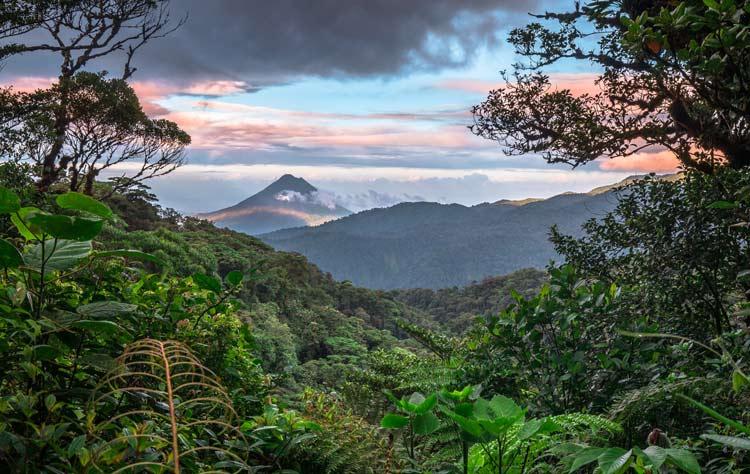 Lush greenery in Costa Rica