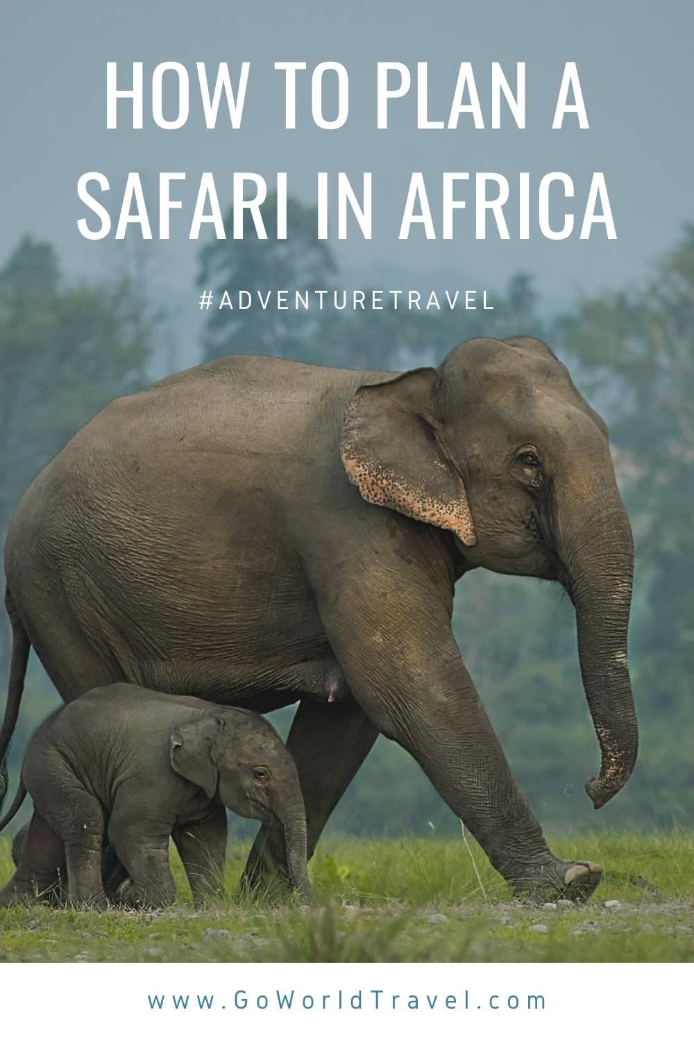 Planning a safari in Africa? Read our travel guide on how to find a safari guide in Africa, where to go, when to visit and more.