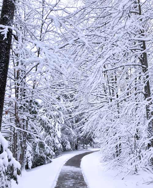 Pathway in the snow at canyon ranch lenox wellness center.