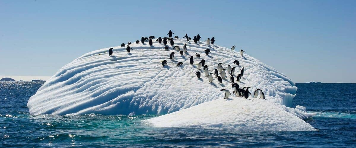 The Adelie Penguins on ice