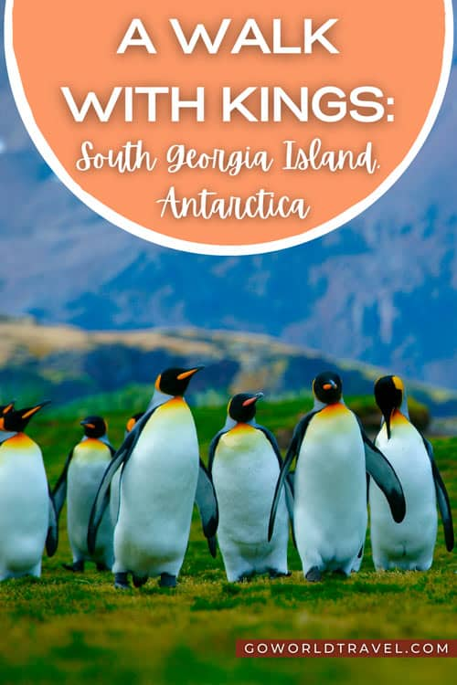 The sandy beaches of this chilly island are a giant nursery for penguins, seals and pelagic birds. Explore South Georgia Island on this subantarctic adventure.