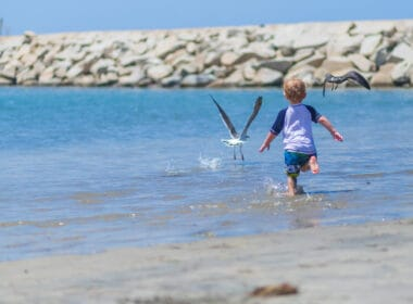 Baby chases seagulls on the beach
