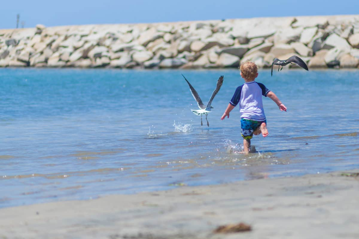 A Family-Friendly Florida Vacation: Wildlife, Beaches, Snorkeling and More