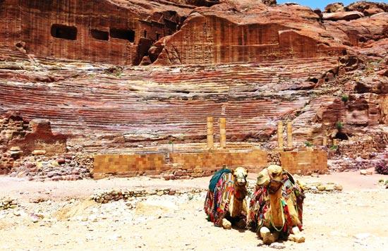 Camels resting at Petra