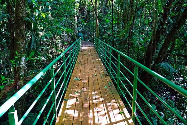 Follow the bridges through the rainforest