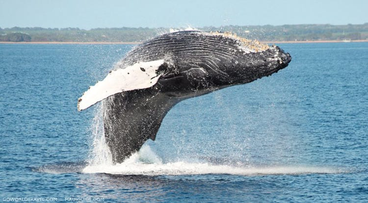 Whale watching with Four Winds