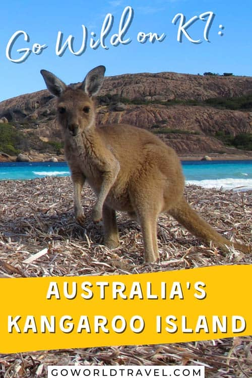 Kangaroo Island, Australia is remote and filled with natural beauty making it the perfect place to loose yourself and find your wild side.