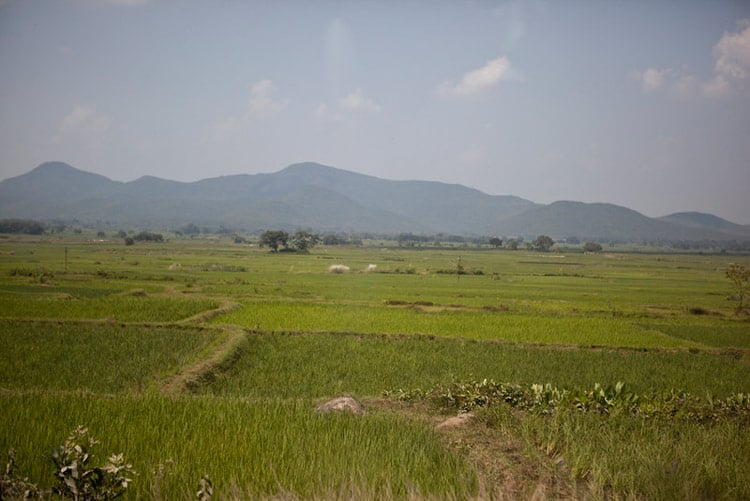 Nearby farming fields in Odisha, India