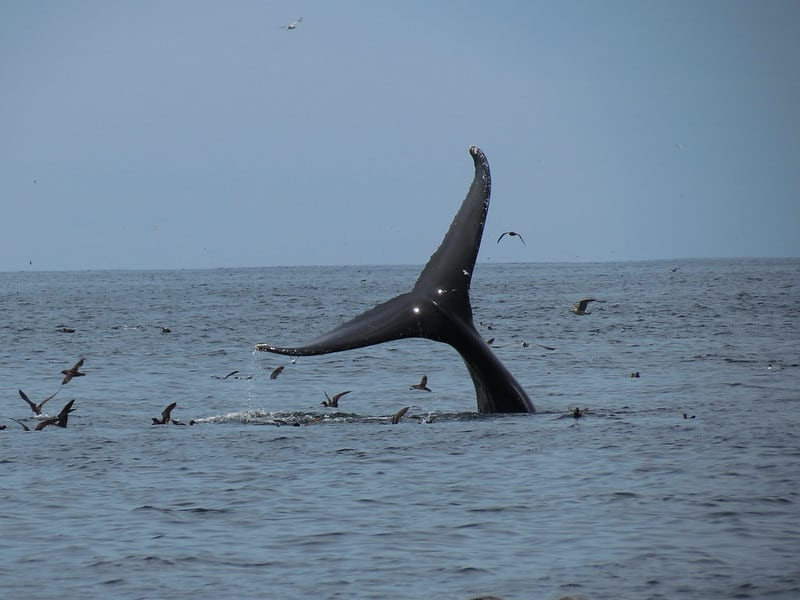 Catching the last of the Whale tail