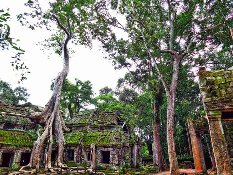 Ancient Angkor Wat Temple taken over by nature