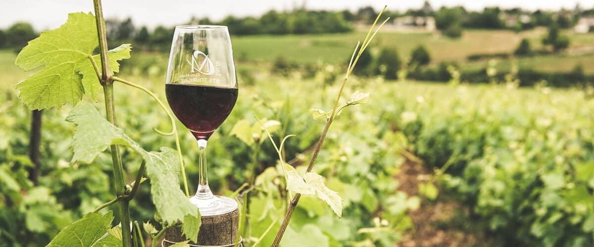 Chilean Luxury Wine Tour