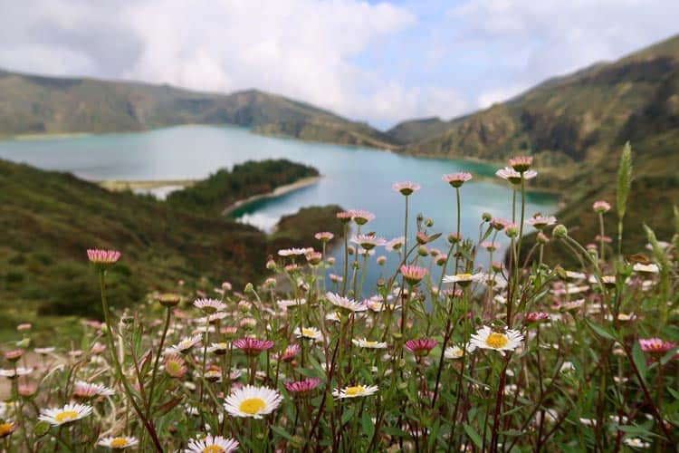 Flowers along the Azores coast
