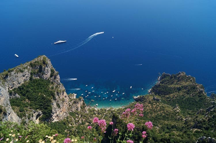 Flowers on a Capri cliff