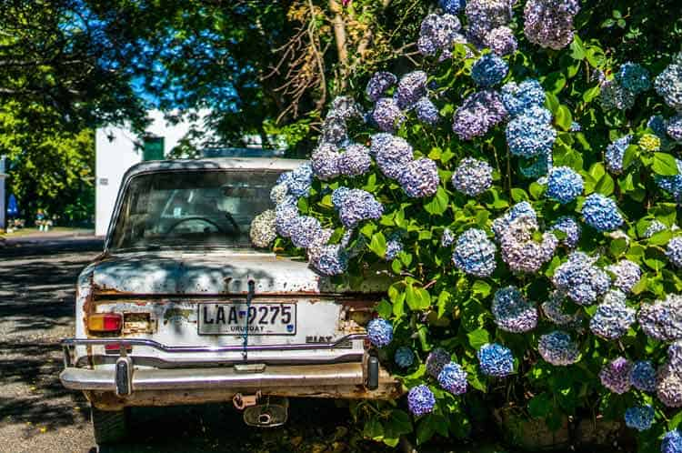 Abundant flowers in Colonia Del Sacramento, Uruguay