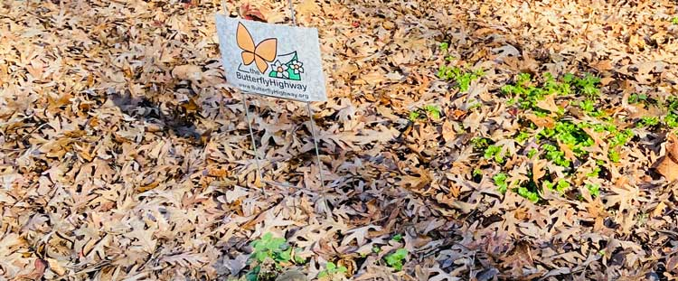 The Butterfly Highway across North Carolina aims to preserve butterflies, bees, birds and pollen dependent wildlife