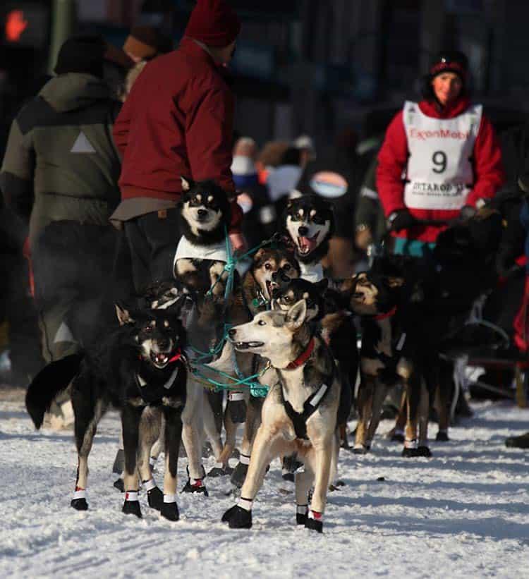 Zoya DeNure and her team from Gakona, Alaska, get underway. Photo by Dino Vournas