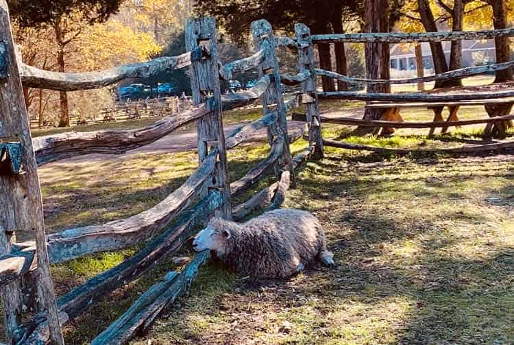 The Latta Plantation Nature Center in North Carolina is perfect for the animal lovers in your family. Photo courtesy of the Historic Latta Plantation