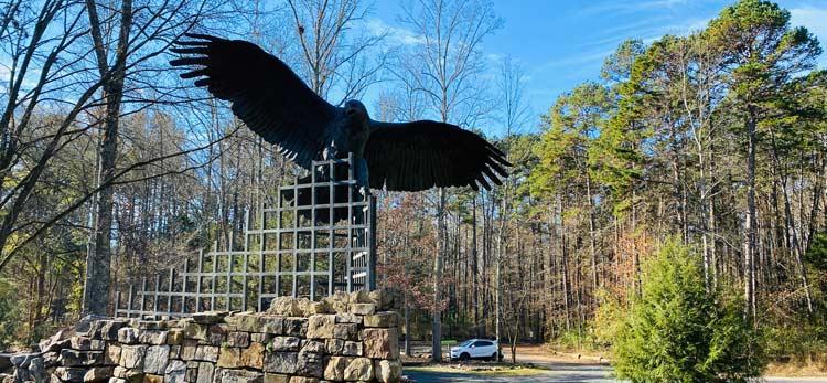 A Raptor in Flight at the Carolina Raptor Center in North Carolina