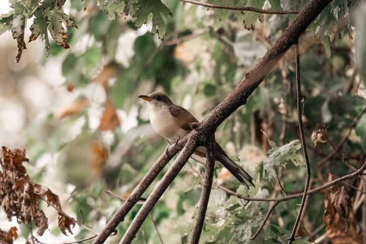 Spend your day in bird watching and enjoy the nature