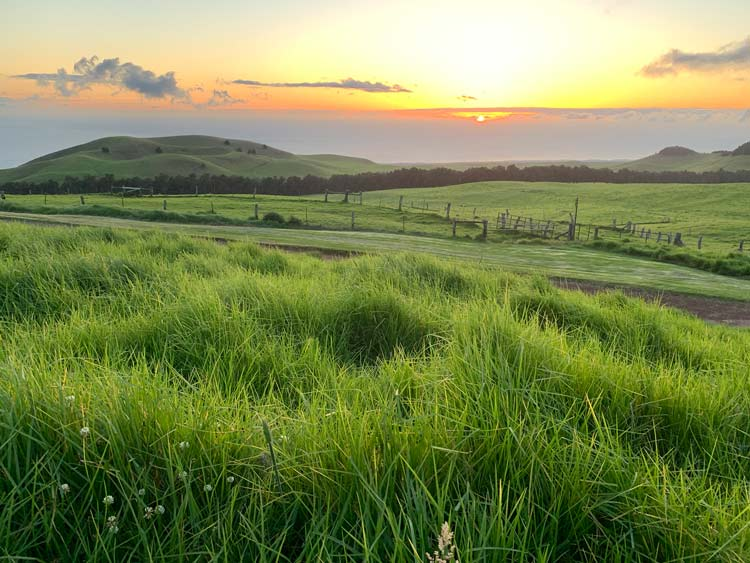 Kahua Ranch on the Big Island is a working cattle ranch that features a sunset dinner every Wednesday night. Photo by Janna Graber