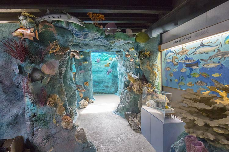 The simulated coral reef at Crane Point Museum in the Florida Keys. Photo by Tony Bosse/Dreamstime.com