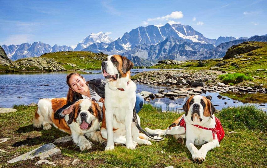 TV Travel Host Alana Nichols hiking with Saint Bernards in Switzerland