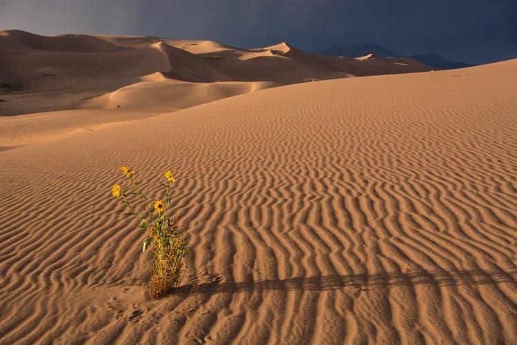 The Dunes has a distinctive sandy landscape. CC Image by Great Sand Dunes National Park & Preserve/Patrick Myers